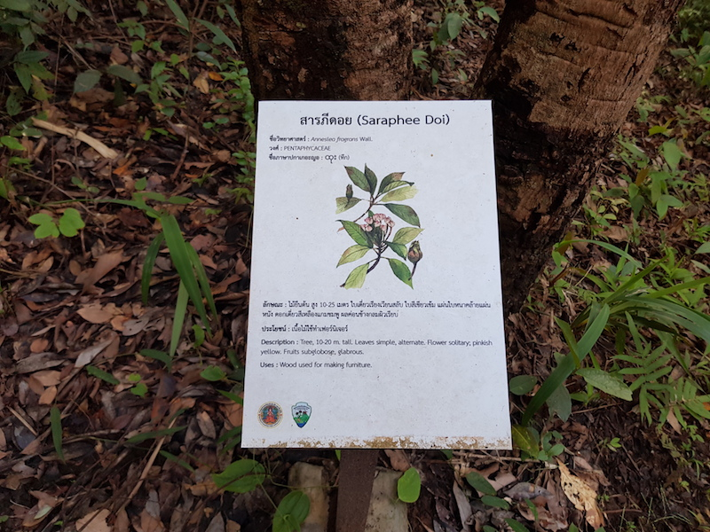 Sign with information about Saraphee Doi Pha Dok Siew Trail