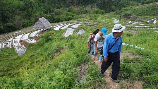 Trekking on rice paddies