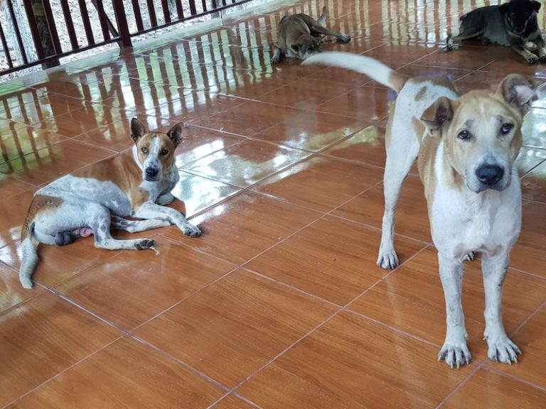 Dogs in an enclosure cats dogs Chiang Mai