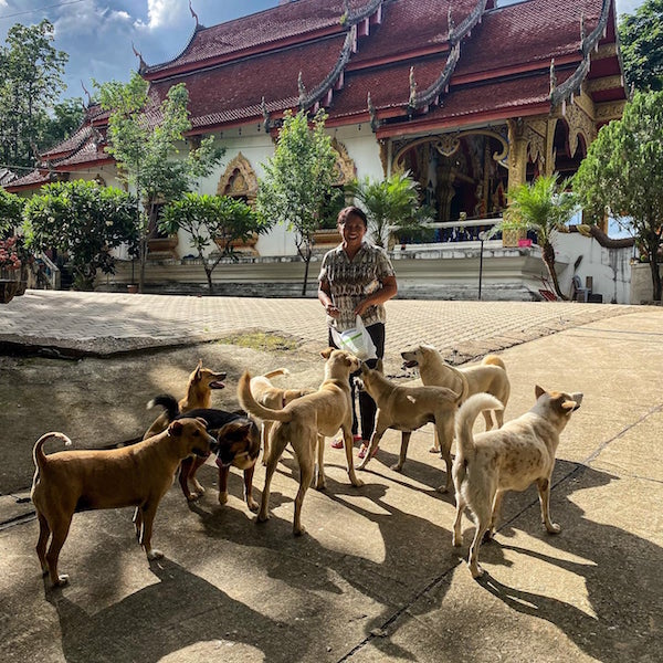 Woman with many dogs cats dogs chiang Mai